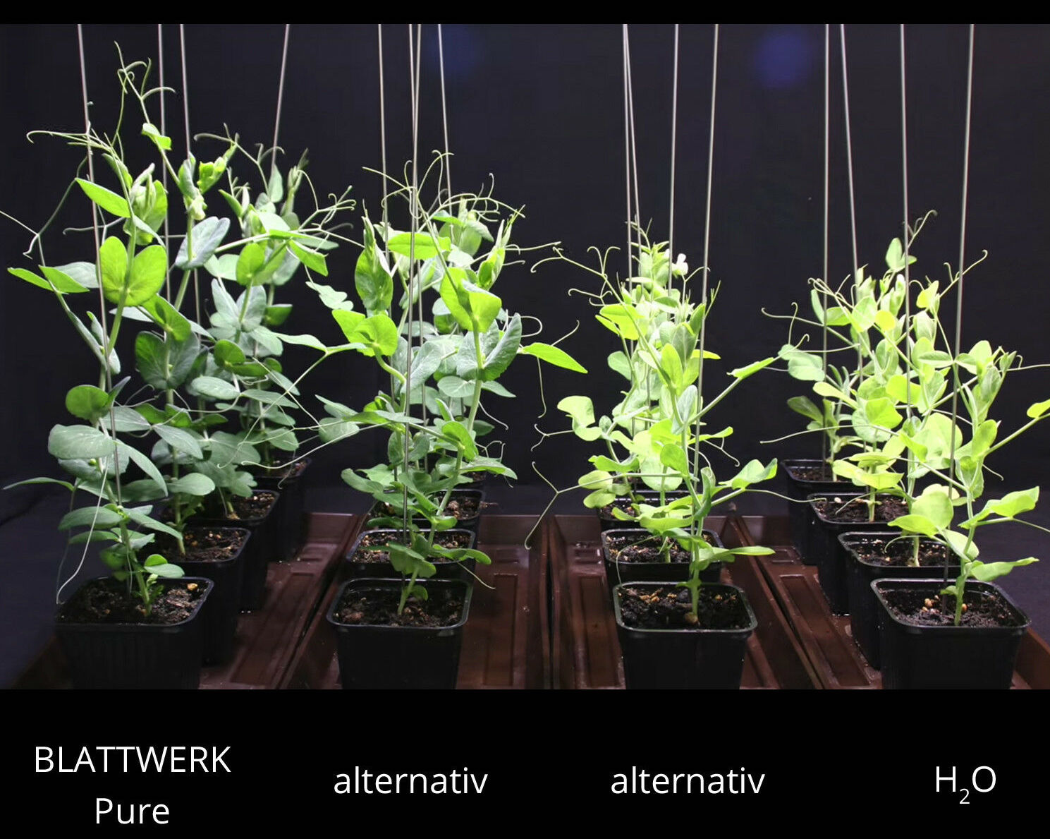 100% Bio organické tekuté hnojivo Blattwerk Pure 1 l.