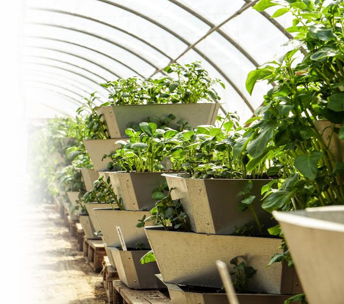 Nádoba na pěstování brambor, 4 patra
